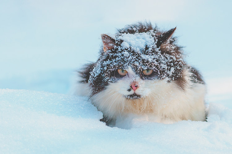 Tips About Cold in Cats